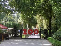 Wrzesień - ostatni dzwonek, żeby odwiedzić krakowskie zoo!